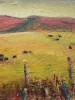 Angus Grazing, Alberta Foothills
