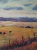 Angus, From the West (36x48 in) SOLD